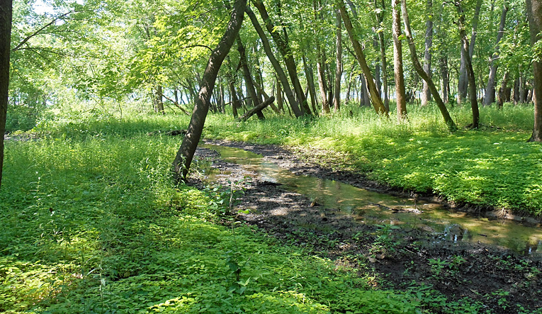 Campground Stream at MillPoint RV Park